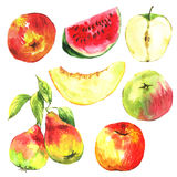 Set of watercolor fruit on a white background Royalty Free Stock Photos