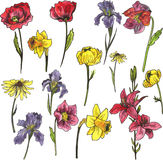 Set of watercolor garden flowers Royalty Free Stock Photography