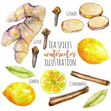 Set of watercolor ginger, lemon and spices elements Stock Image