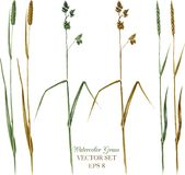 Set of watercolor grass Royalty Free Stock Photos