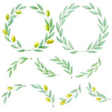 Set of watercolor hand drawn green olive branch Royalty Free Stock Image