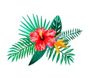 Set of Watercolor hand painted tropical flowers, leaves and plants. Bright jungle exotic bouqoet perfect for summer wedding royalty free illustration
