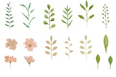 Set of watercolor herbarium elements pink flowers and leaf. Summer and spring seasons. Wedding card pattern.