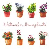 Set of watercolor houseplants in the pots. Royalty Free Stock Photo