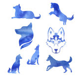 Set of watercolor husky. Watercolor dog husky icons and silhouettes. Set of illustrations in different poses Royalty Free Stock Photo