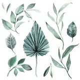 Set of watercolor illustrations of leaves and greenery of the tropics. Jungle leaves clipart. Stylish invitation design