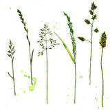 Set of watercolor and ink drawing plants Stock Photography