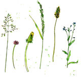 Set of watercolor and ink drawing plants. Set of watercolor and ink drawing wild flowers and herbs,  painted field plants, color floral elements, hand drawn Stock Images