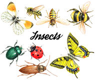 Set of watercolor insects. Bright beautiful watercolor insects  on white background Stock Images