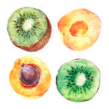 Set of watercolor kiwi fruit and apricots Stock Images