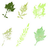 Set of watercolor leaves. On a light background Royalty Free Stock Photos