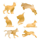 Set of watercolor lynx Royalty Free Stock Photography