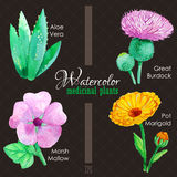 Set of watercolor madicinal plants Royalty Free Stock Photography