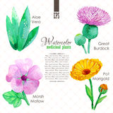 Set of watercolor madicinal plants Stock Images