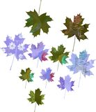 Set of watercolor maple leaves. Royalty Free Stock Photos