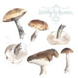 Set of watercolor mushrooms. Brown cap boletus. Stock Image