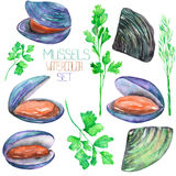 A set with the watercolor mussels and greenery, seafood Royalty Free Stock Photos