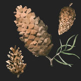 Set of watercolor painted and hand drawn inked drawing of pine cones. royalty free stock photo