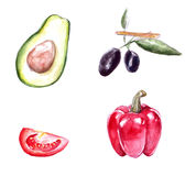 Set of watercolor paintings of avocado, red Royalty Free Stock Images
