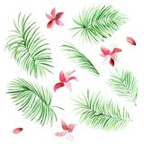Set of watercolor palm leaves and flowers on white background. Set of watercolor palm leaves and flowers isolated on white background. Tropical natural elements Stock Images