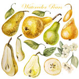 Set with watercolor pears Royalty Free Stock Photos