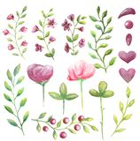 Set of watercolor pink large and small flowers, branches with green leaves for your decisions royalty free illustration