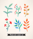 Set of watercolor plants Royalty Free Stock Images