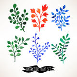 Set of watercolor plants Stock Images