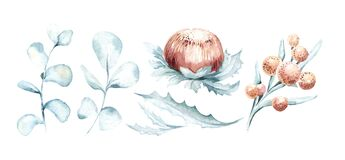 Set of watercolor protea flower and tropical leaves, hand painted illustration of exotic australian and african floral