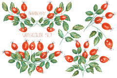 A set of the watercolor rosehip branches Stock Photos