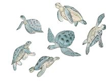 Set watercolor sea turtle on white background.Summer exotic print stock illustration