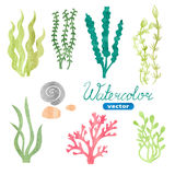Set of watercolor seaweed, corals and stones isolated on white Stock Image