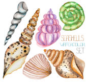 A set with the watercolor shells Royalty Free Stock Photos