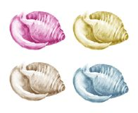 Set of Watercolor Shells Royalty Free Stock Image