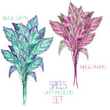 A set with the watercolor spices: bundles of the green and purple basil. A set with the isolated watercolor spices (spicy herbs): bundles of the green and Stock Image