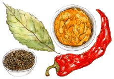 Set of watercolor spices on white. Coriander seed, bay leaf, red chili pepper, turmeric and curry - watercolor painting on white background vector illustration