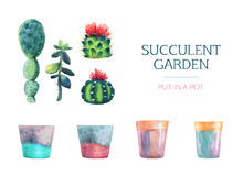 Set of watercolor succulent and a flower pot. royalty free illustration
