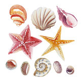 Set of Watercolor topical shell, starfish and pebble isolated vector illustration