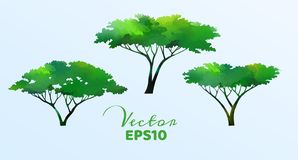 Set of watercolor trees . Vector illustration EPS10.  vector illustration