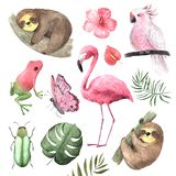 Set of Watercolor tropical animals and birds
