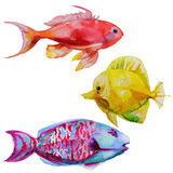 Set with watercolor tropical fish. Set with hand drawn watercolor tropical fish Royalty Free Stock Photo
