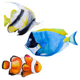 Set with watercolor tropical fish. Set with hand drawn watercolor tropical fish Stock Image