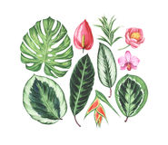 Set of watercolor tropical flowers and leaves. vector illustration