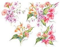 Set of watercolor tropical vintage floral bouquet of exotic flow Stock Images