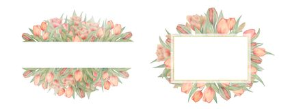 Set of watercolor tulips frames. Drawn by hand. Ideal for logo, wedding invitations, cards stock illustration