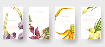 Set of watercolor vegetable tags and cards, vector illustrated Stock Image