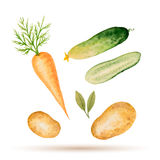Set of watercolor vegetables. Stock Image