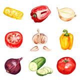 Set of watercolor vegetables Stock Photography