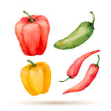 Set of watercolor vegetables. Stock Images