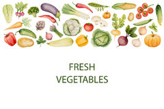 Set of watercolor vegetables. Template for your design. Vector illustration Vector Illustration